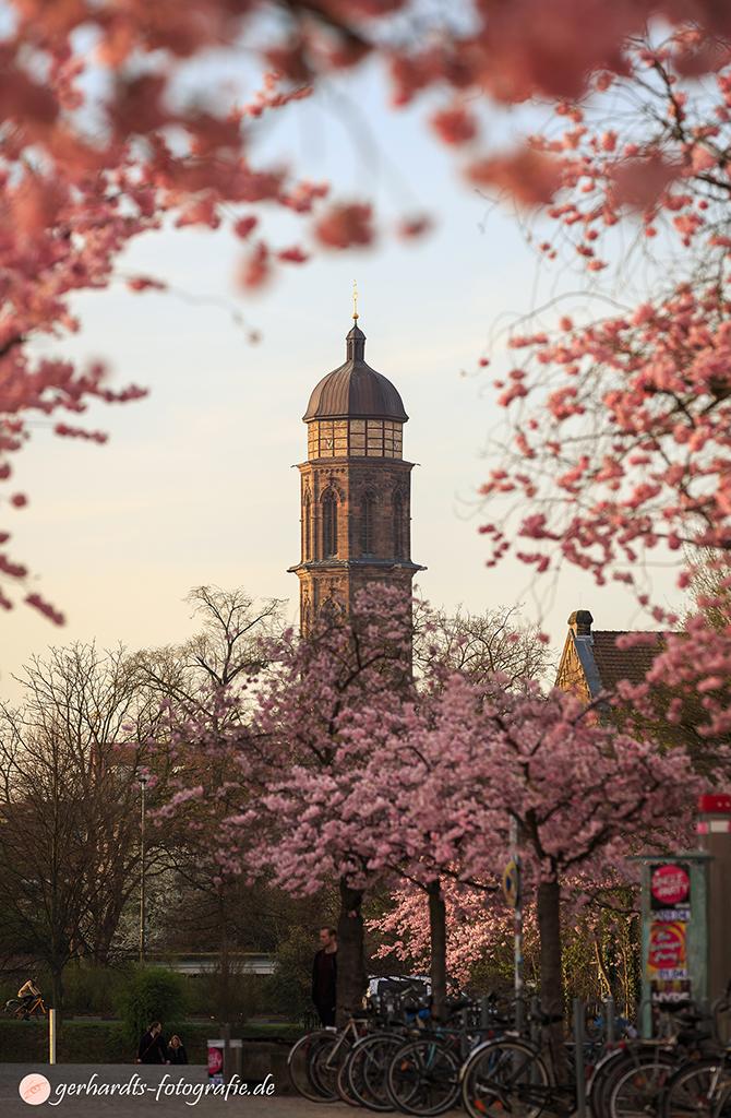 Kirschblüte Campus Göttingen | Fotograf Göttingen