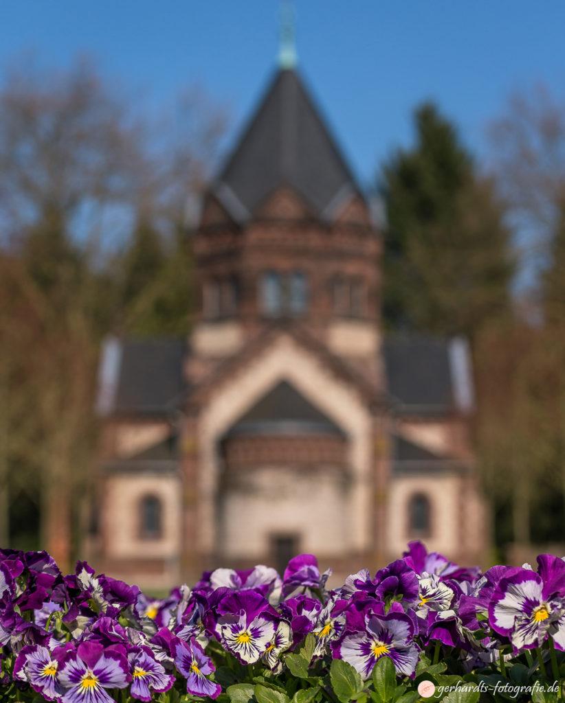 Stiefmütterchen auf dem Stadtfriedhof Göttingen