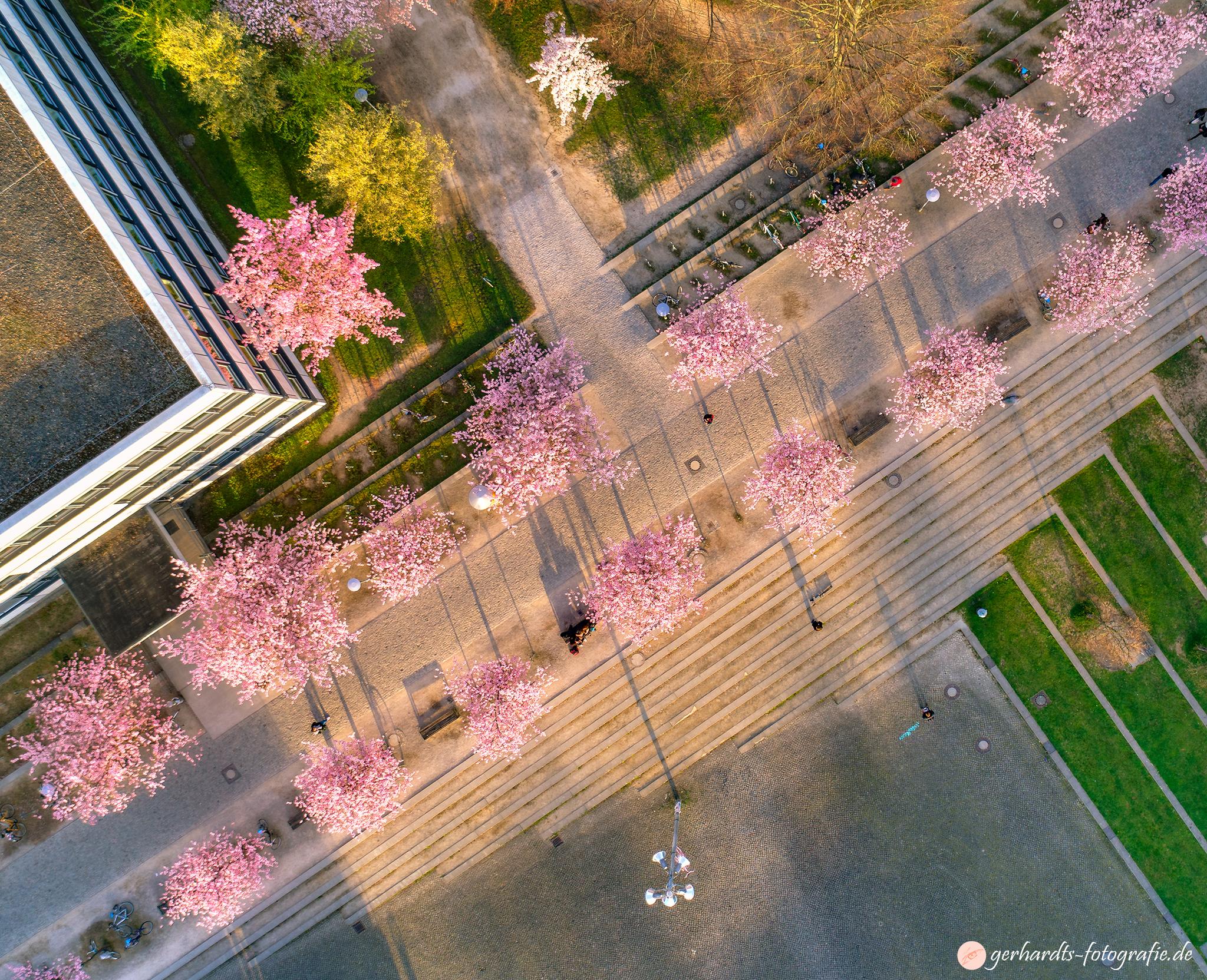 Luftbild Göttingen Kirschblüte | Luftbildaufnahmen Göttingen Südniedersachsen