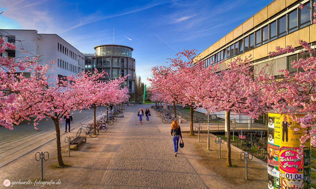 Kirschblüte Campus Göttingen Luftbild | Fotograf Göttingen
